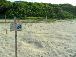 Turtle nesting site. These were everywhere.