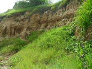 Lush cliffs